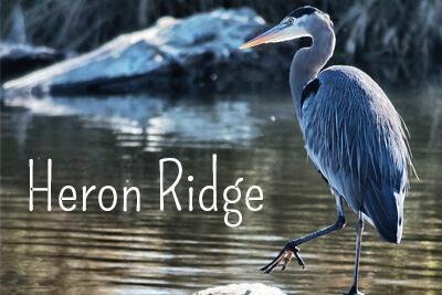 Heron Ridge