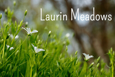 Laurin Meadows